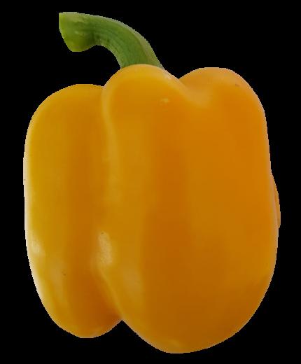 פלפל-בלוקי-צהוב-10185